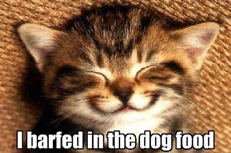 cute prank Cats smile - 7874259200