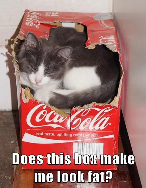 diet coke box Cats - 7874427904