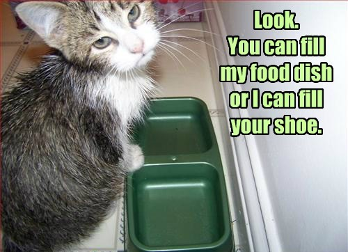 Look. You can fill my food dish or I can fill your shoe.
