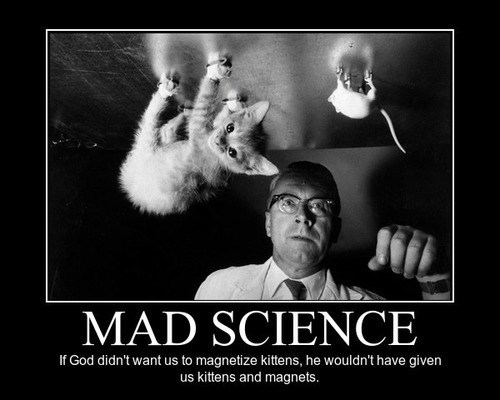 kitten wtf MAD SCIENCE magnets funny School of FAIL - 7874507520