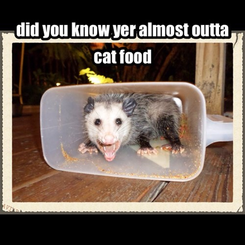 scary possums frightening cat food