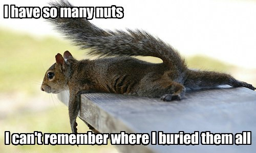 squirrel First World Problems nuts