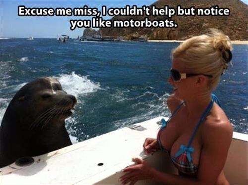 puns motorboat bewbs animals - 7876065024