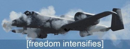 freedom - 7876104192