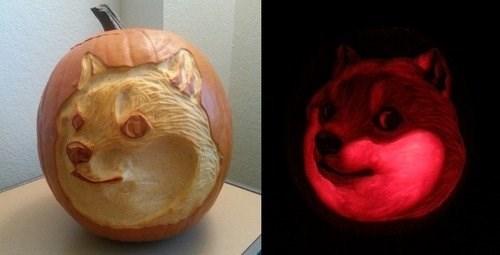 doge,pumpkins,shibe,carving,funny