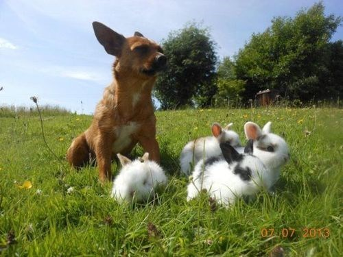 dogs cute sheep rabbits