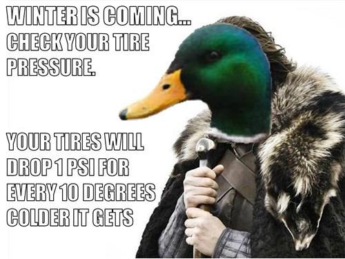 brace yourselves Memes actual advice mallard. - 7876317952