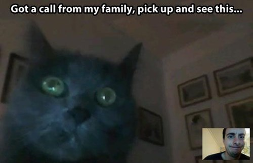 photobomb webcam Cats - 7876407040