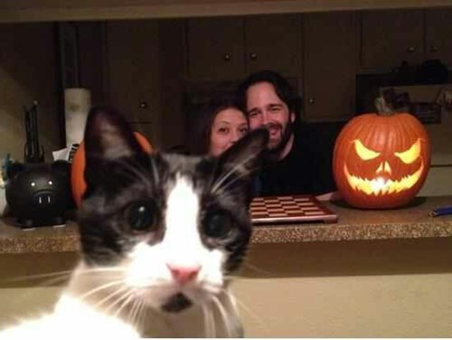 photobomb jack o lanterns cute Cats halloween - 7876428032