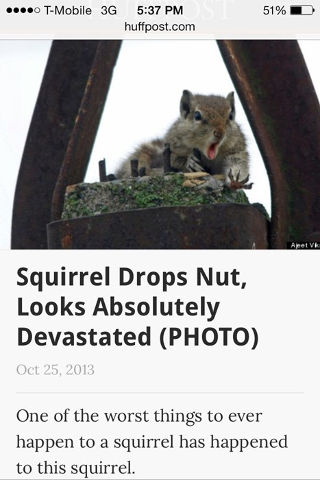 news,headline,squirrel,funny,animals,fail nation,g rated