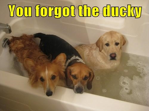 dogs bath cute rubber ducky