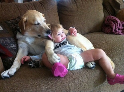 Babies dogs parenting - 7877551616