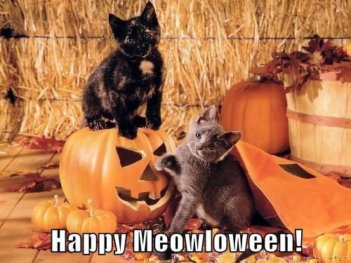 kitten pumpkins halloween cute - 7877560064