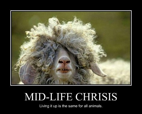 MID-LIFE CHRISIS Living it up is the same for all animals.