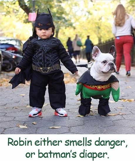Dog - Robin either smells danger, or batman's diaper.