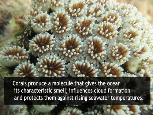 coral ocean science funny fun facts - 7877669632