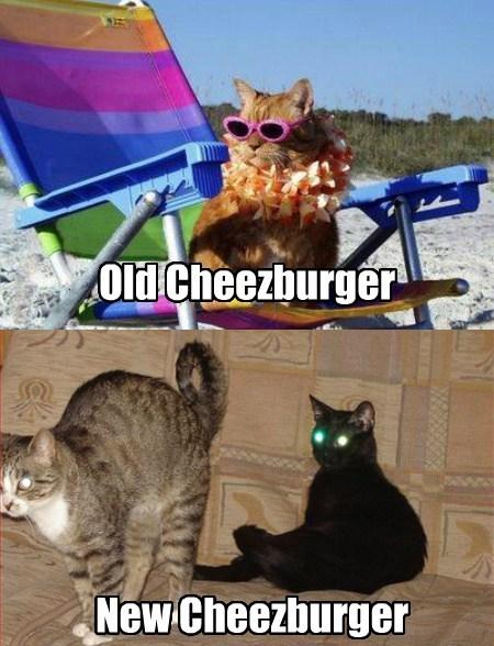 Cheezburger Image 7877729024