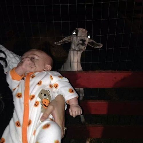 Babies photobomb goats - 7877772800
