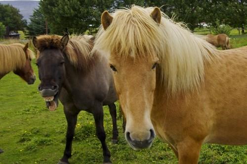 photobomb,horses