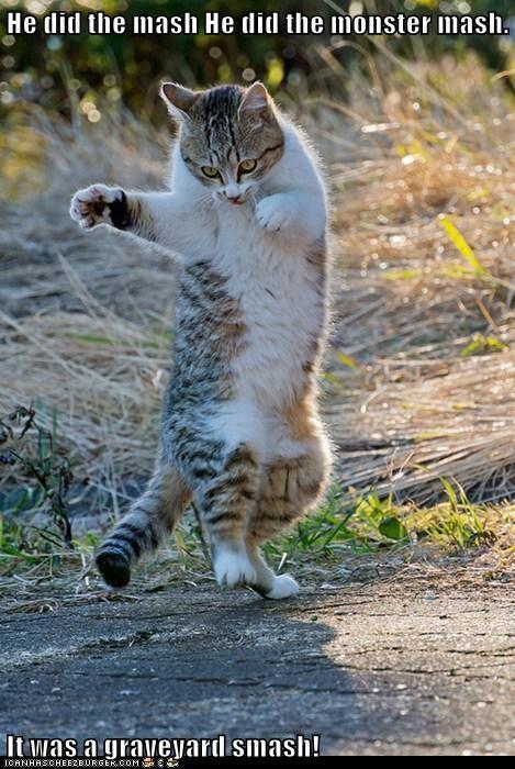 dancing halloween Cats - 7877782272