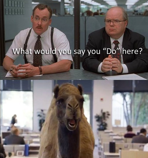 hump day,camels,Office Space