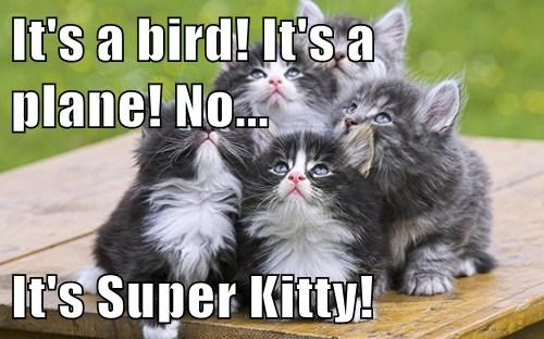super kitty,kitten,cute