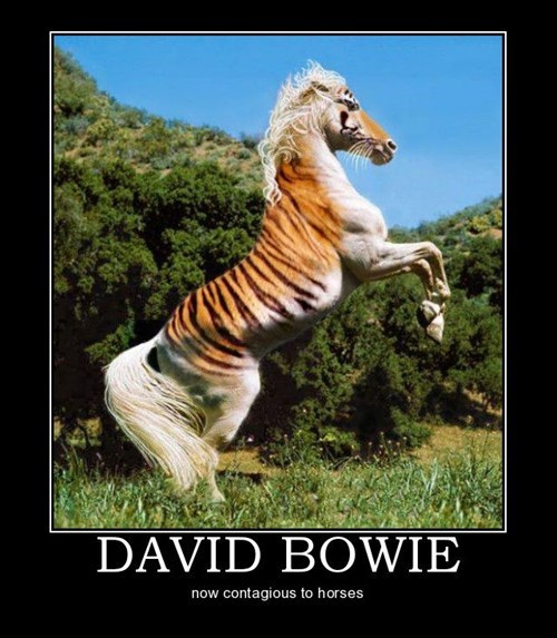 fancy wtf david bowie funny horse - 7878062592