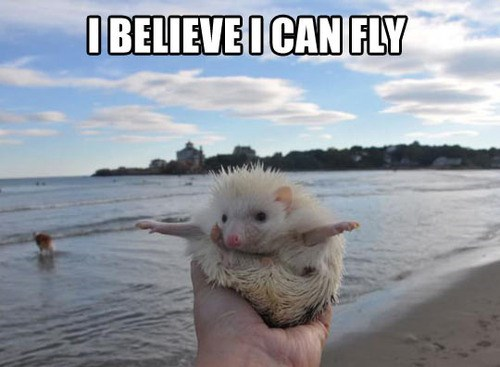 fly puns cute beach hedgehogs