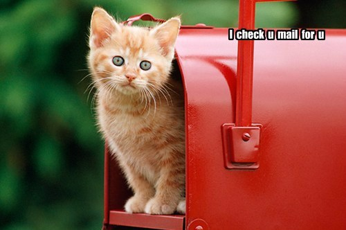 kitten cute Cats mail - 7878172416