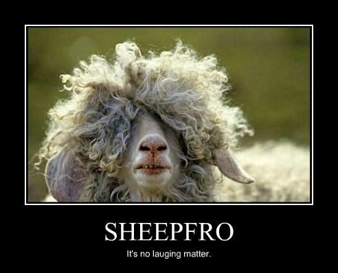 SHEEPFRO It's no lauging matter.