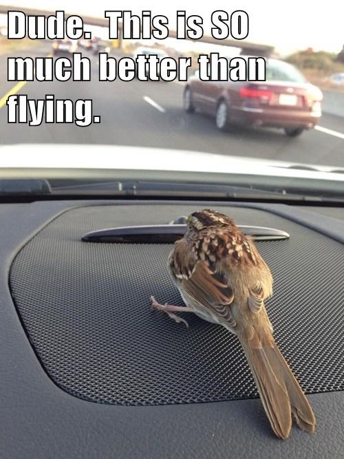 birds cars cute flying - 7878990336