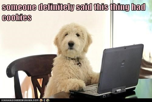 dogs computers cute cookies - 7879041280