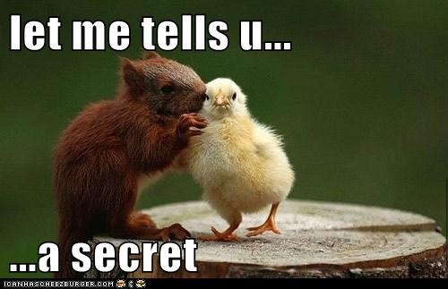 secret chicks cute squirrels chickens - 7879149824