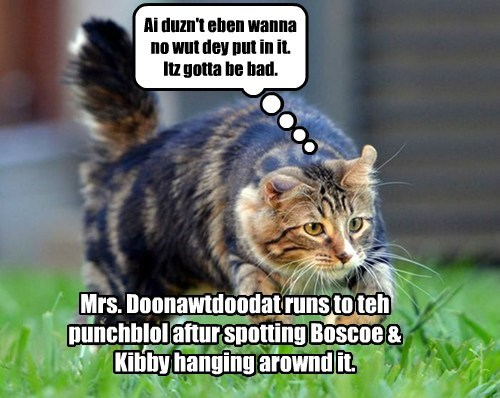 Mrs. Doonawtdoodat runs to teh punchblol aftur spotting Boscoe & Kibby hanging arownd it. Ai duzn't eben wanna no wut dey put in it. Itz gotta be bad.
