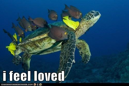 KISS turtles love fish