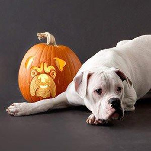 dogs,halloween,pumpkin carving