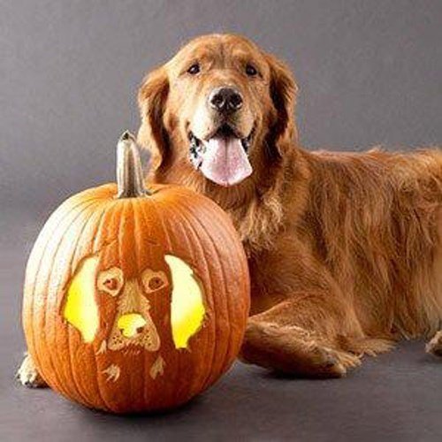 dogs,pumpkin carving,halloween