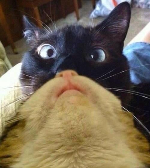photobomb cute Cats - 7879716864