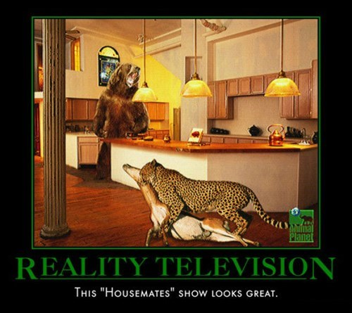 wtf housemates reality tv funny animals - 7879766784