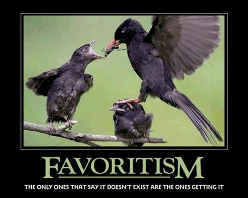 favorites birds food funny - 7879786496