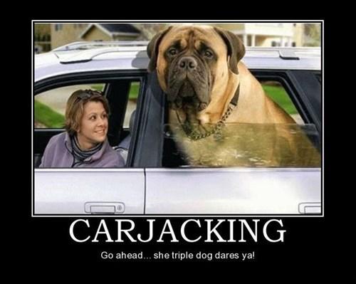 dogs,wtf,carjacked,huge,funny