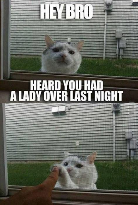 bros Cats funny - 7879892480