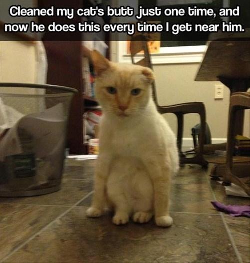 Lolcats Clean Lol At Funny Cat Memes Funny Cat