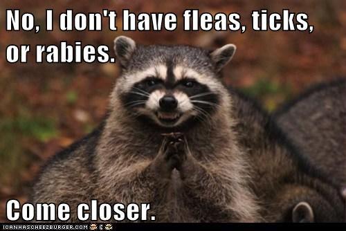 sneaky raccoons funny - 7880657408