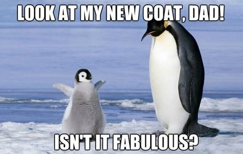 penguins,clothes,animals