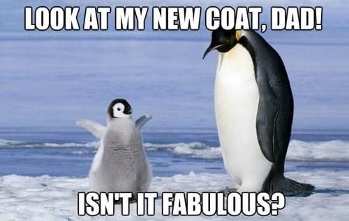 penguins clothes animals - 7880978432