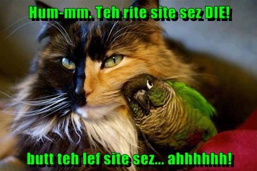 Cheezburger Image 7880978944