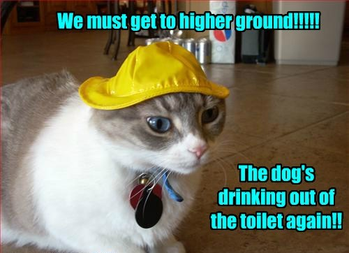 drinking dogs be prepared toilet Cats - 7880988672