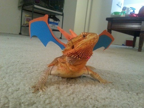 costume Pokémon charizard animals - 7881006080