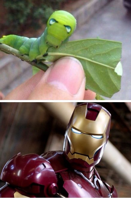 totally looks like,iron man,caterpillar